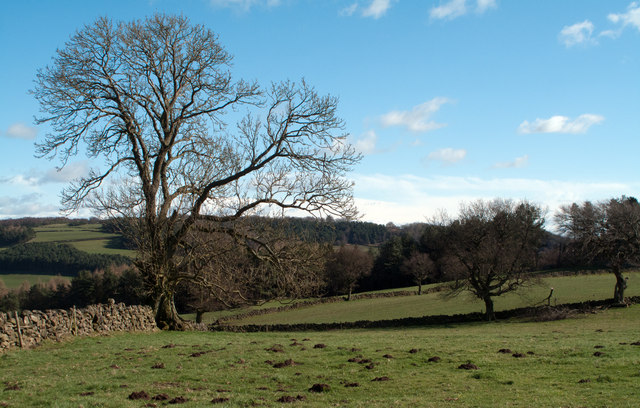 Fields and woodland from the Limestone Way