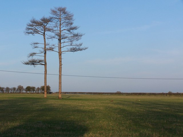 Two trees near Broughton