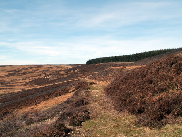Track in Waskerley valley