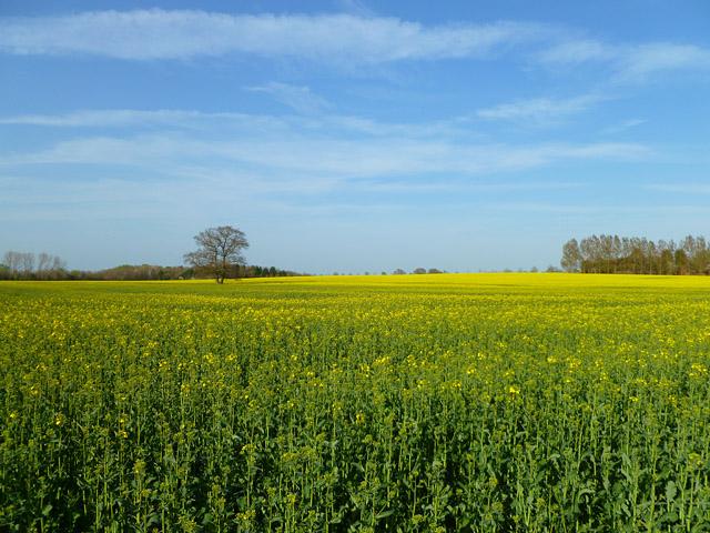 Farmland, Sparsholt