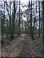 SP9208 : Footpath through Haresgarden Wood by Rob Farrow