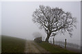 SN9480 : Tree near track summit by Nigel Brown