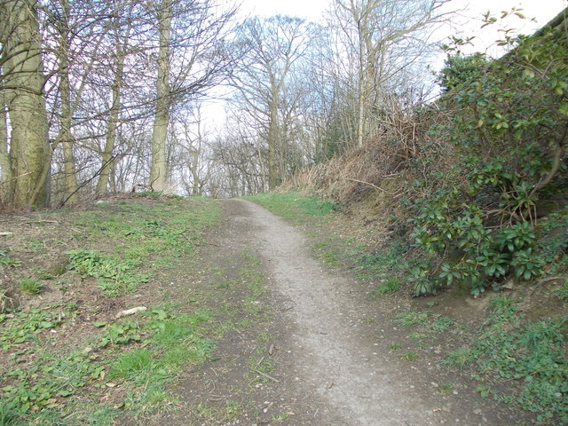 Woodland Track - Shay Lane