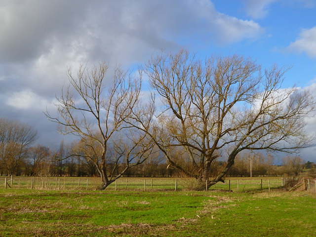 Pasture, Charvil