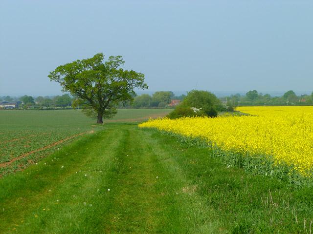 Farmland, Fifield, Bray