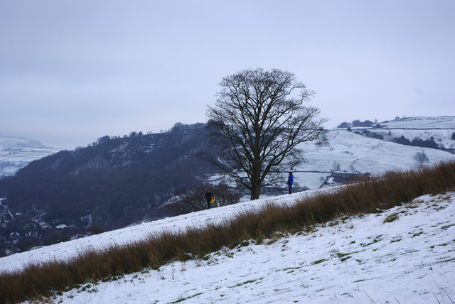 A lone tree below Daisy Bank, Mytholmroyd