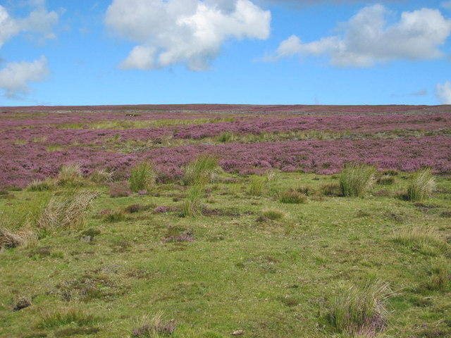 Bulbeck Common south of Longman's Grave