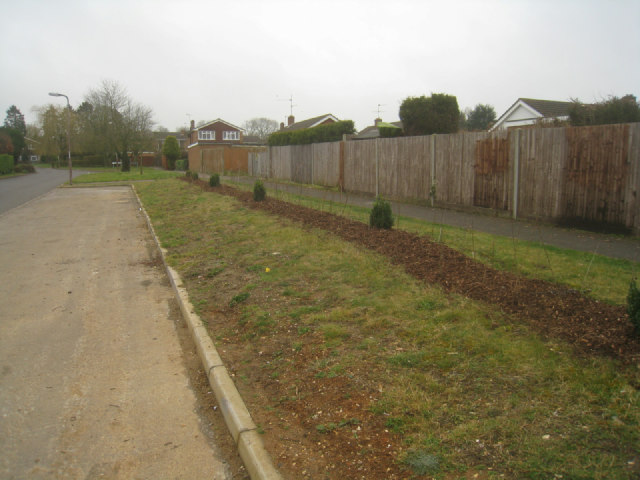 New planting - Kennet Way