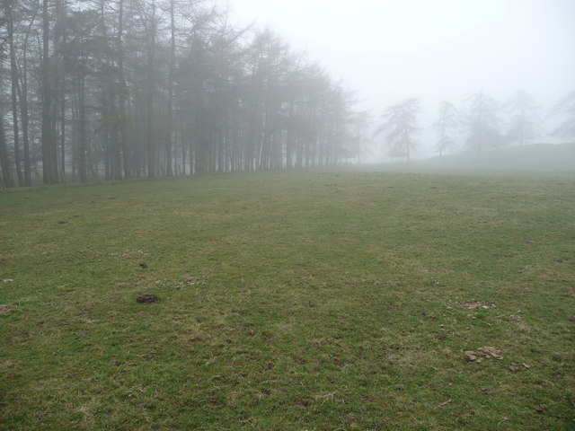Upland pasture near Panpunton Hill in early spring