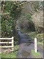 SX0873 : Camel Trail at Merry Meeting by David Smith