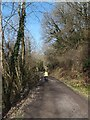 SX0169 : Camel Trail alongside River Camel near Polbrock by David Smith