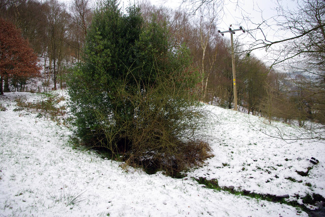A boggy area in Martin Wood, Mytholmroyd