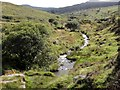 SX5771 : The River Meavy Below Black Tor by Tony Atkin