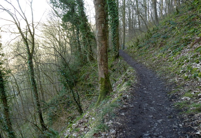 Footpath across steep wooded slope