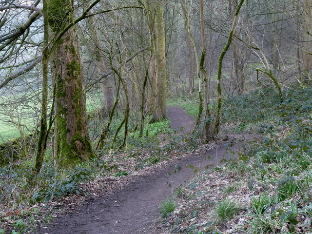 Footpath in Great Shacklow Wood