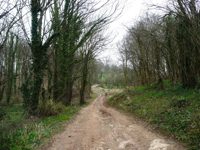 Woodland footpath and farm track