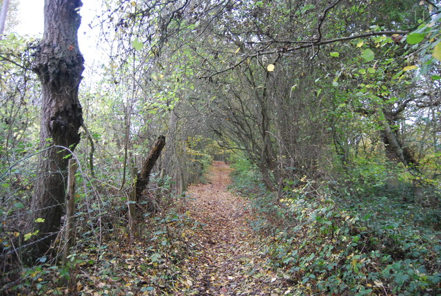 Footpath along Great Chattenden Wood