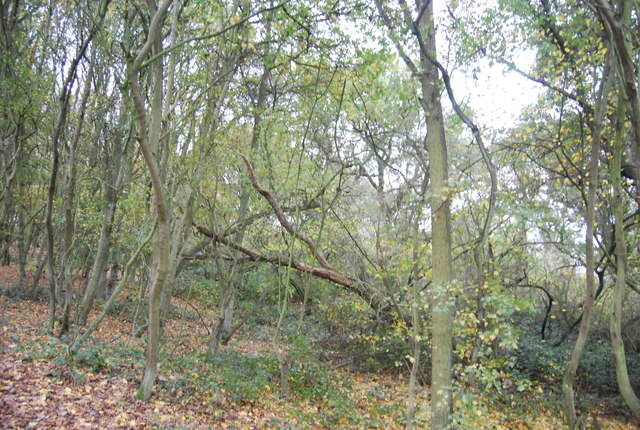 Berry Court Wood