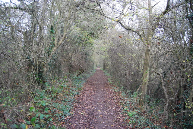 Bridleway through woodland