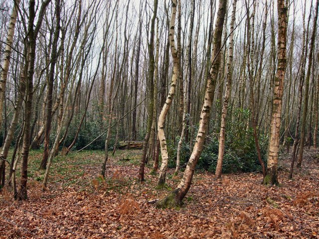 Coolhurst Wood