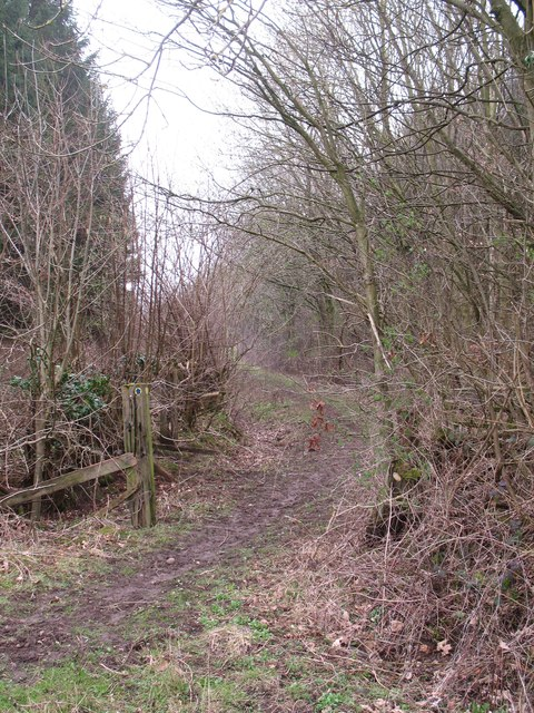 Woodland track near Ladybank House