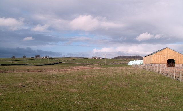Field at Wardlow Mires
