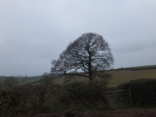 Bare tree in winter on Hone Hill