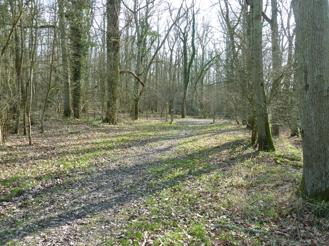 Sussex Border Path in Rowlands Wood
