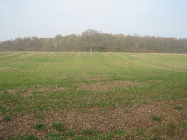 View towards Pardown Copse