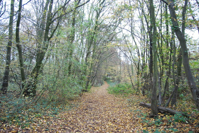 Footpath, Great Chattenden Wood
