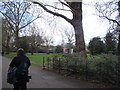TQ2877 : View of the Battersea Park Evolution from the path in the park by Robert Lamb