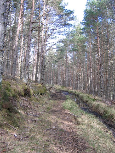 Minor track through the forest