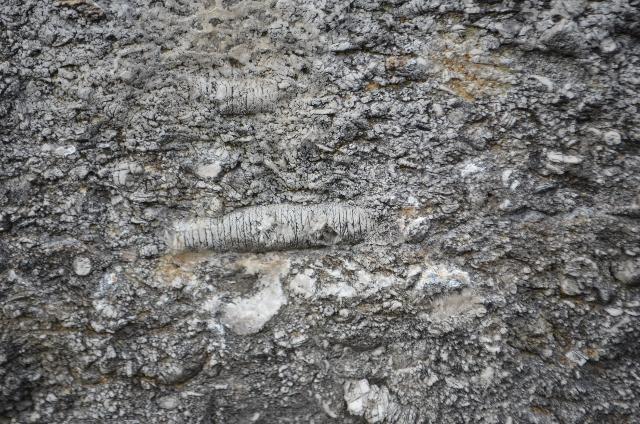 Crinoidal Limestone