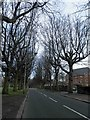 SJ3887 : Tree lined Aigburth Vale, Liverpool by Steve  Fareham