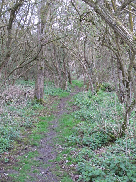 Footpath through Curry's Copse