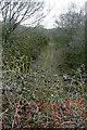 SP6913 : Towards Ashendon Junction by Graham Horn