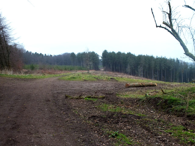 Newcombe Common