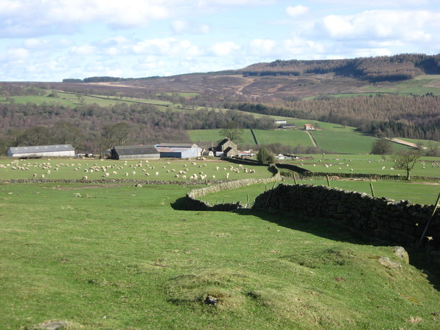 Near Low Ewe Cote
