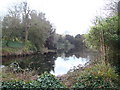 TQ2877 : View of the lake in Battersea Park #2 by Robert Lamb