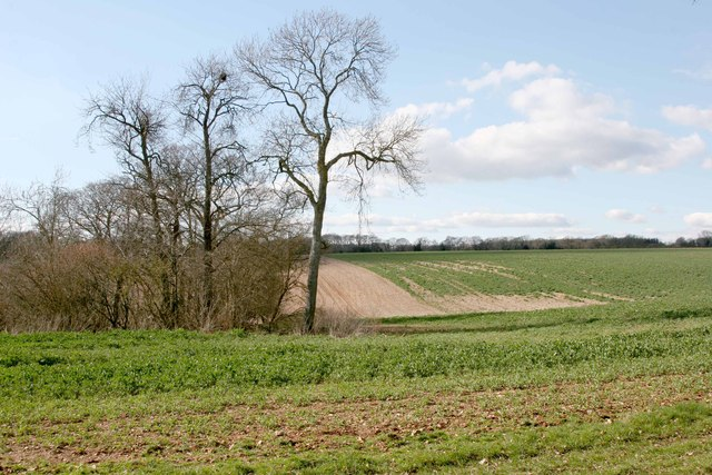 Near Tangley