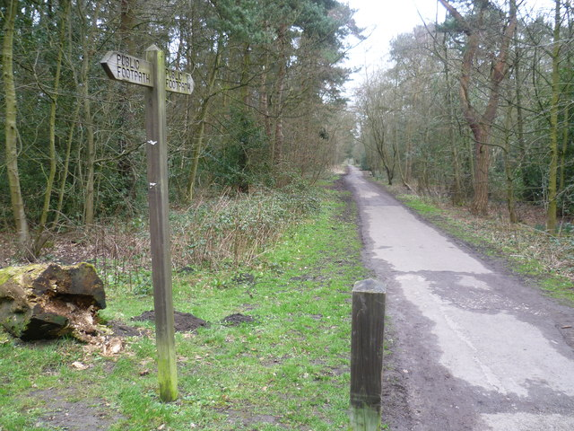 Footpath through Pinewoods