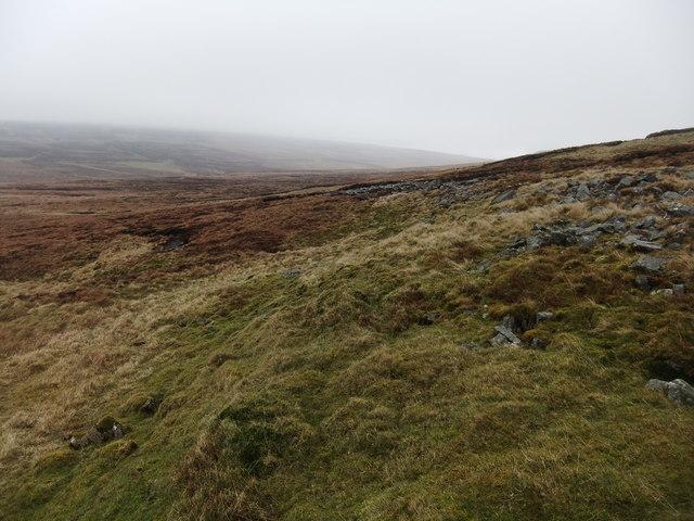 Murton Herds