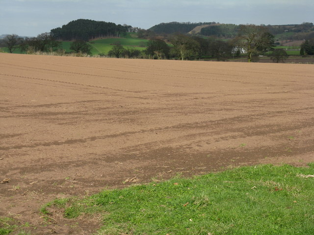 Newly sown field at Broxton