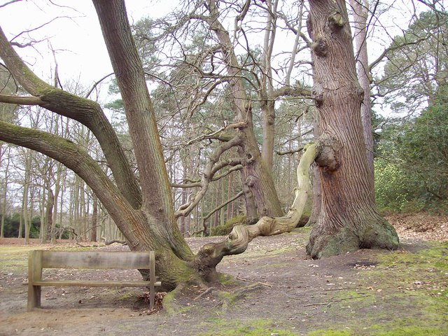 Conjoined Trees
