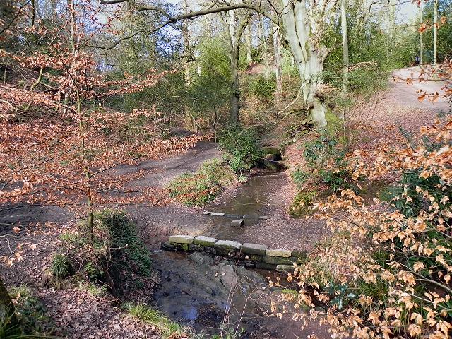 Styal Country Park, North Wood