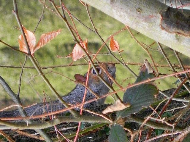 The Elusive Squirrel