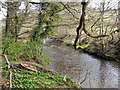 SJ8183 : River Bollin by David Dixon
