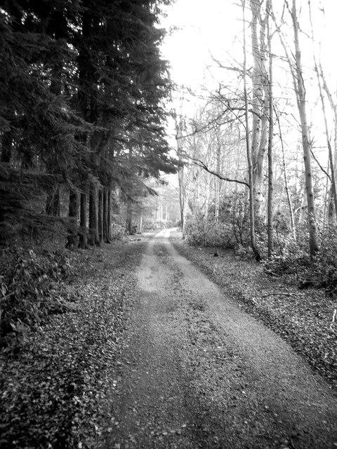 Woodland track to Blackhall