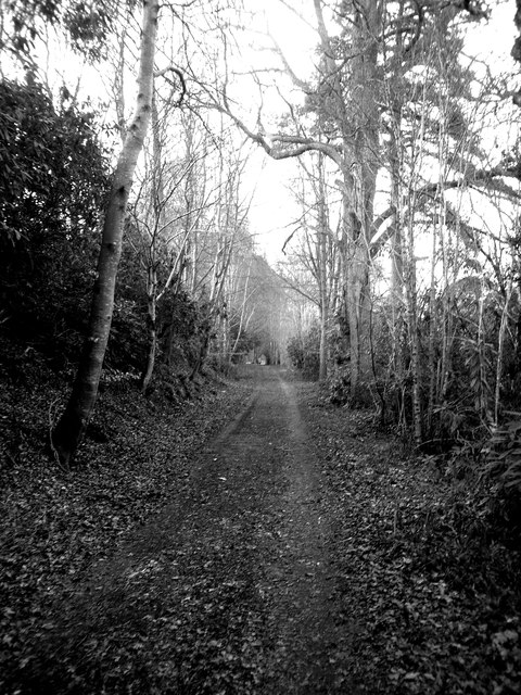 Woodland track to Blackhall