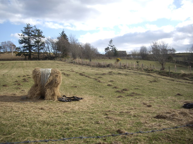 Hayfield near Hill of Baldodle